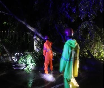 cuaca-ekstrim-pohon-tumbang-kec-kramatwatu