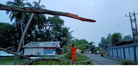 cuaca-ekstrim-pohon-tumbang-kecamatan-cinangka