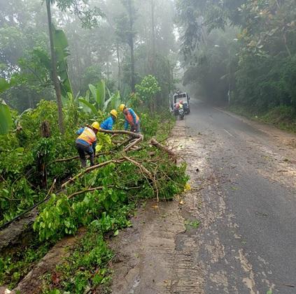 laporan-kejadian-pohon-tumbang-di-kecamatan-gunung-sari