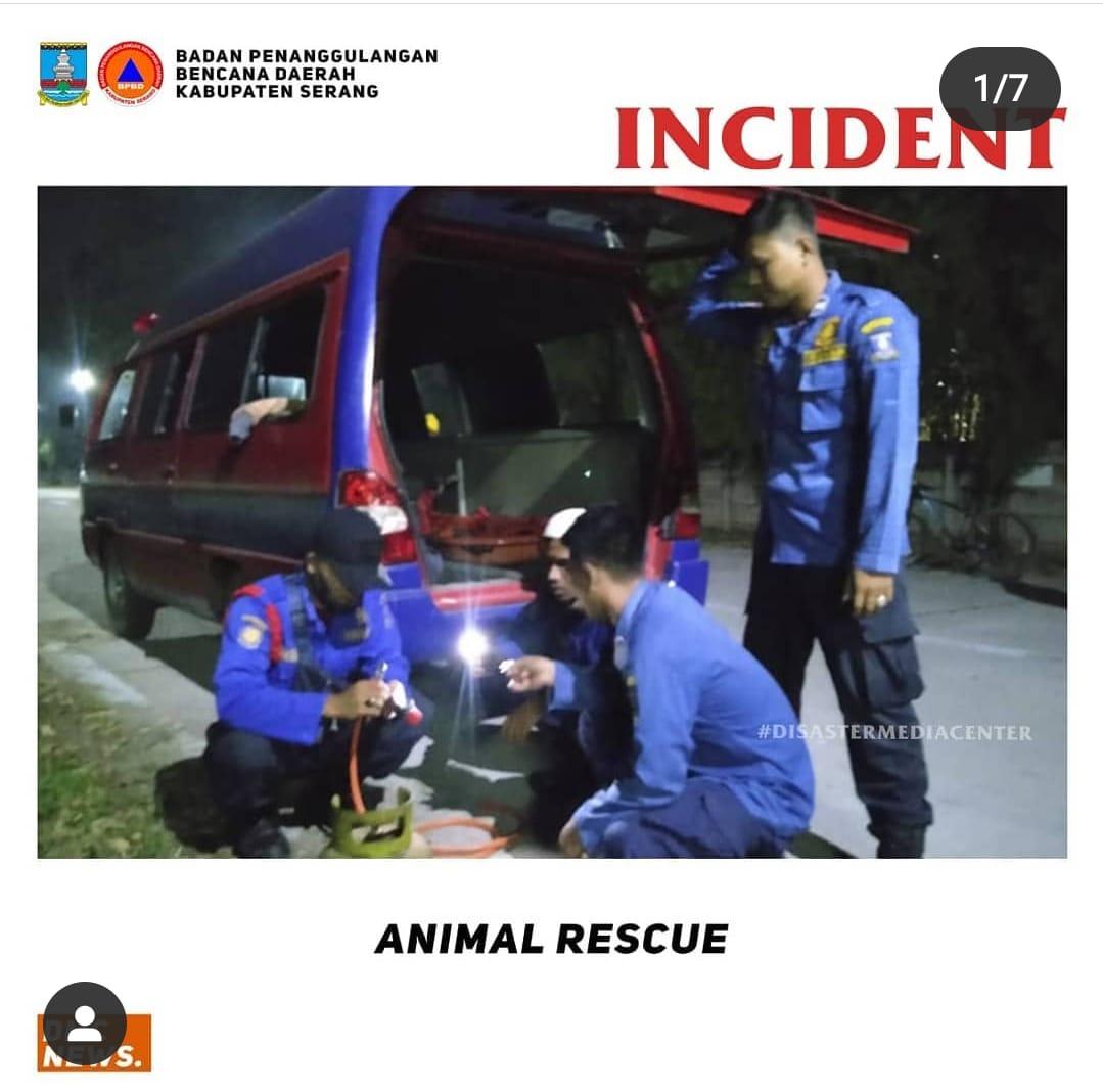 penanganan-animal-rescue