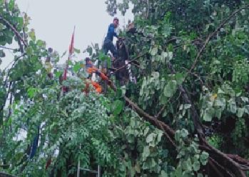 pohon-tumbang-kecamatan-anyer-kabupaten-serang